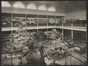 Display of animals and fossils in McCoy Hall