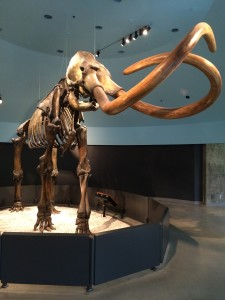 Mammoth from La Brea Tar Pits