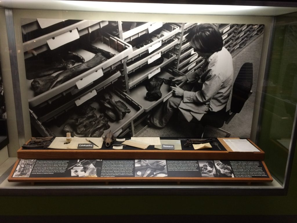 Display about cataloguing and research. La Brea Tar Pits & Museum, Los Angeles.
