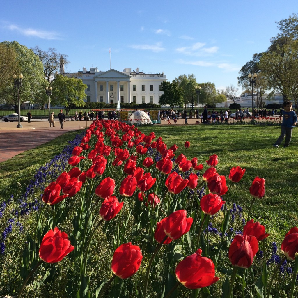Flowers and the White House